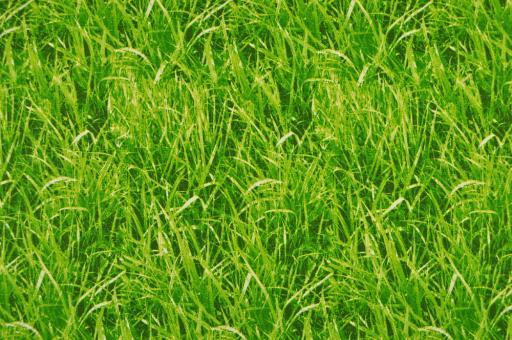 Rasen - Gruen