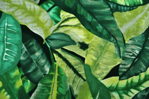 Outdoor- und Markisenstoff - Amazonas Grün
